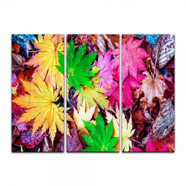 Leinwandbild - Bunte Herbstblätter