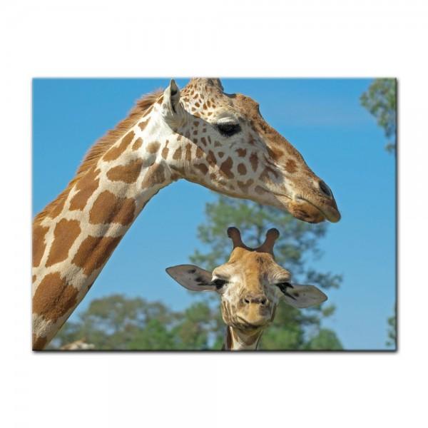 Leinwandbild - Mutter und Baby Giraffe