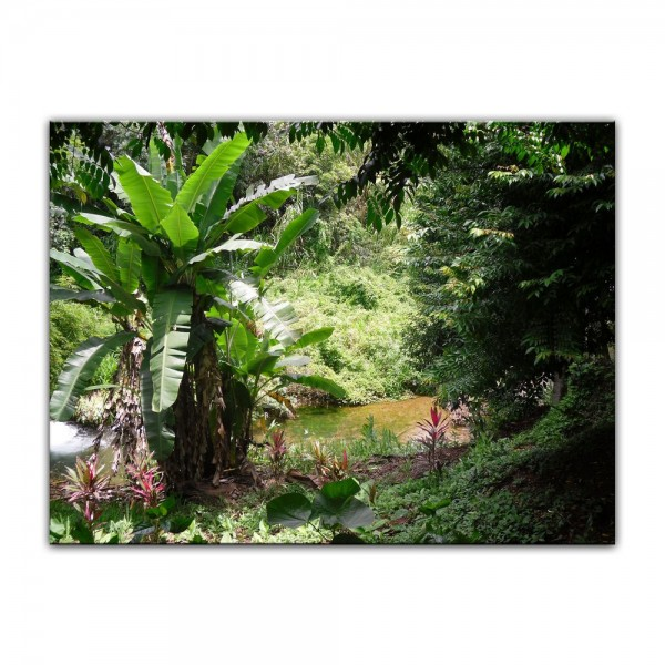 Leinwandbild - Bananenbaum im Dschungel
