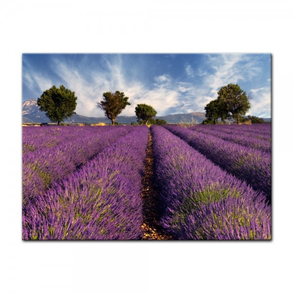 Leinwandbild - Lavendelfeld in der Provence - Frankreich