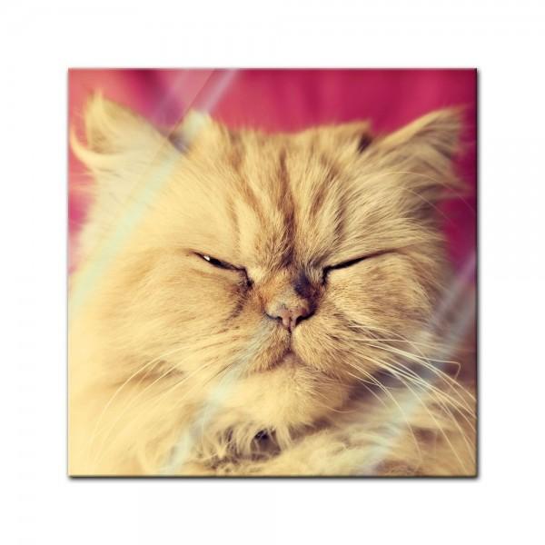 Glasbild - niedliche Katze