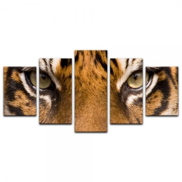 Leinwandbild - Tiger Nahaufnahme