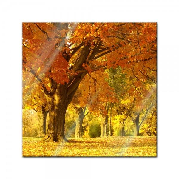 Glasbild - Herbst Szene