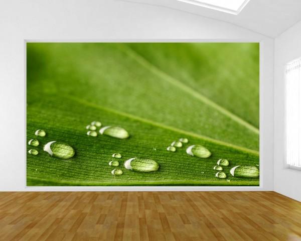 Fototapete - Wasserspuren auf einem Blatt