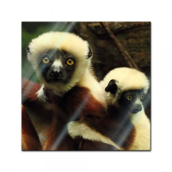 Glasbild - Big Eyes - Indri Lemur