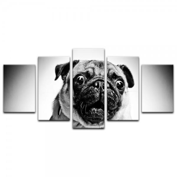 Leinwandbild - Crazy Mops - schwarz weiß