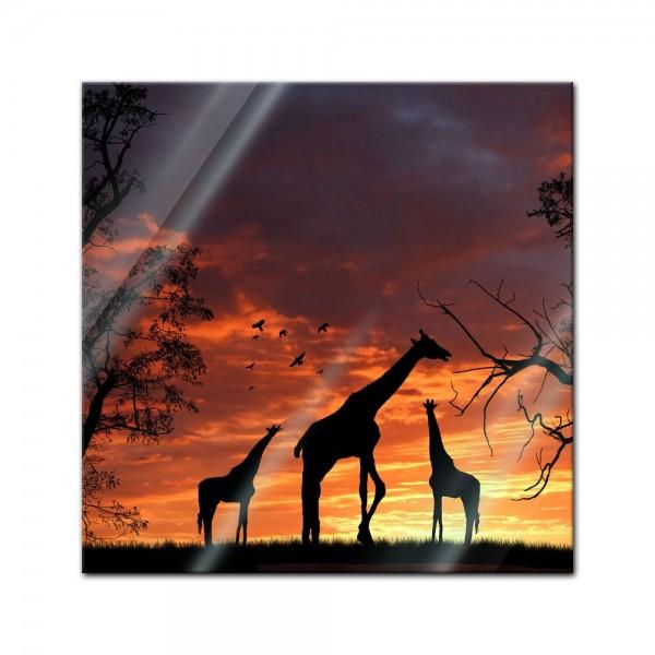 Glasbild - Giraffen im Sonnenuntergang