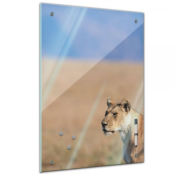 Memoboard - Tiere - Löwin