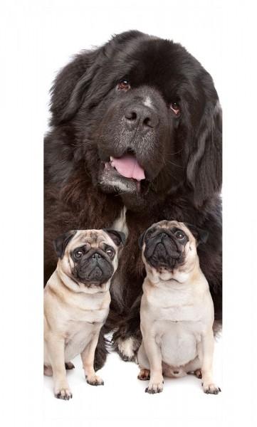 Türaufkleber - Großer und kleine Hunde