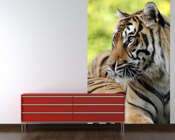 Fototapete Sumatra Tiger