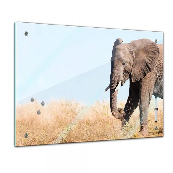 Memoboard - Tiere - Elefantenbulle