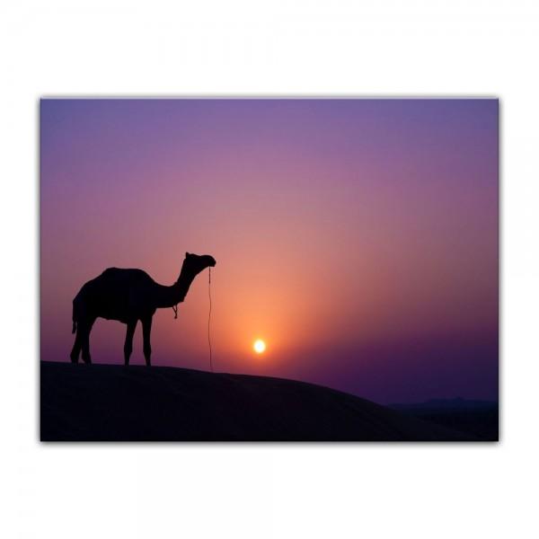Leinwandbild - Kamel im Sonnenuntergang