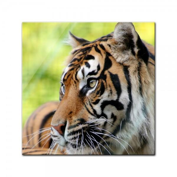 Glasbild - Sumatra Tiger