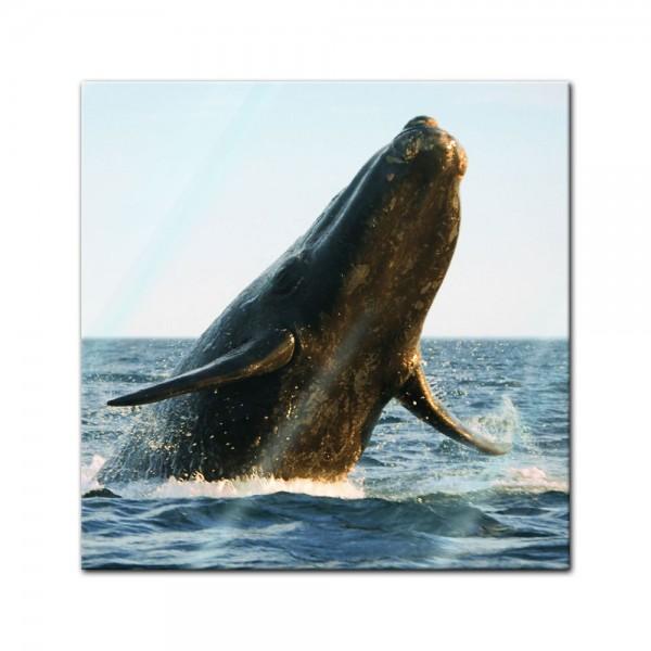 Glasbild - Wal