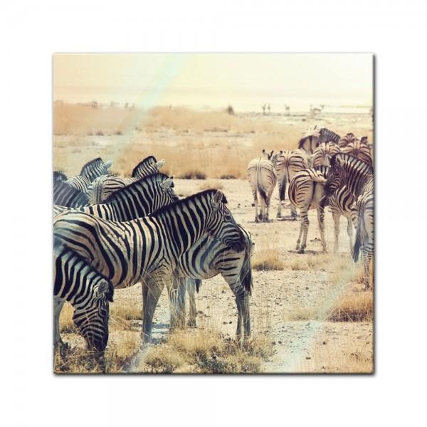 Glasbild - Zebras im Sonnenuntergang