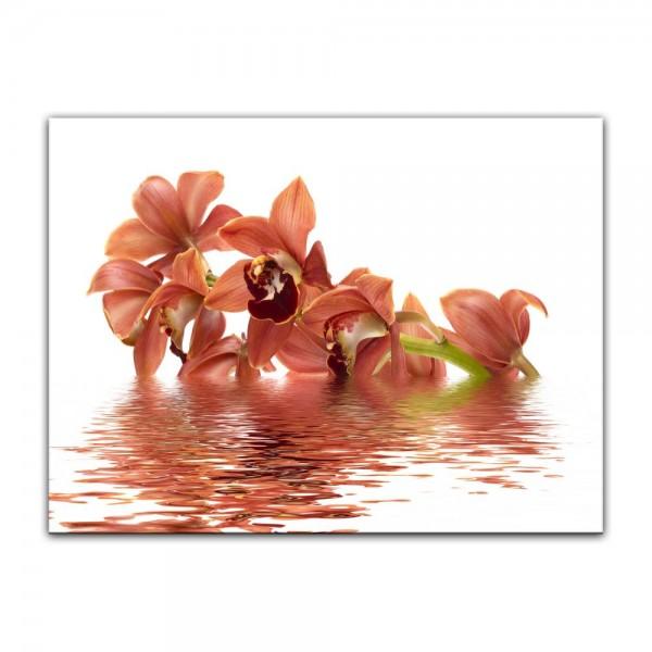 Leinwandbild - Orchidee V