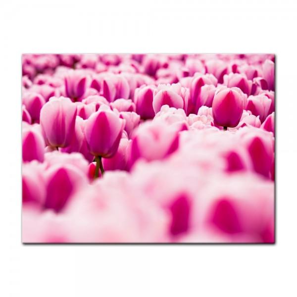 Leinwandbild - Pinke Tulpen