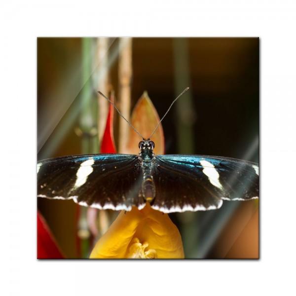 Glasbild - Schmetterling II