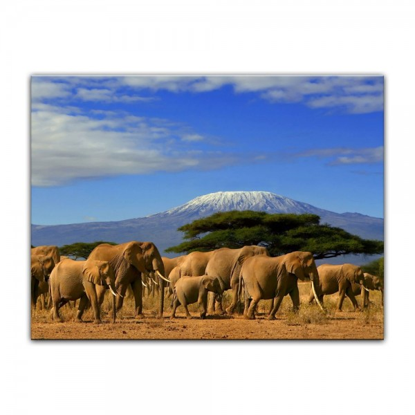 Leinwandbild - Elefanten am Kilimandscharo