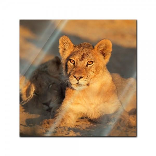 Glasbild - Afrikanisches Löwenbaby