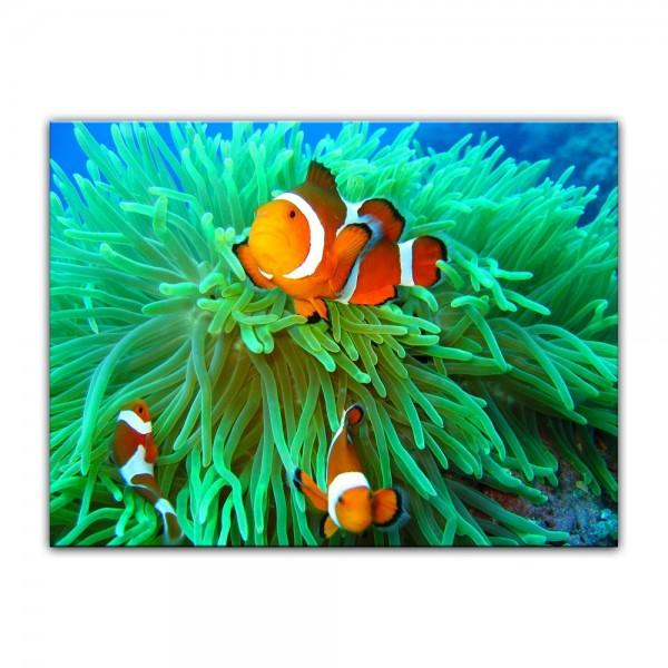 Leinwandbild - Clownfisch
