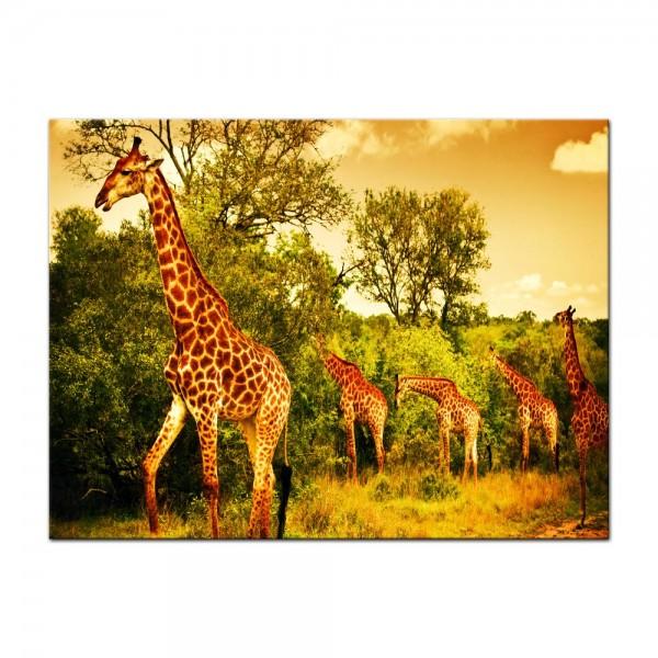 Leinwandbild - Giraffen - Südafrika