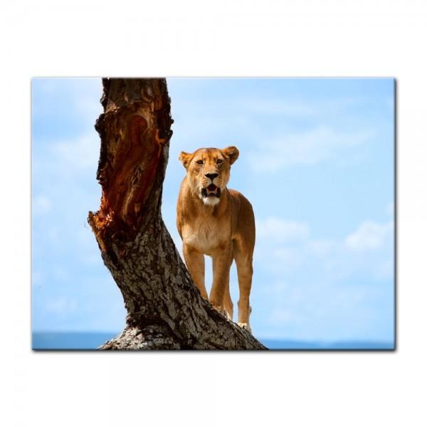Leinwandbild - Löwin auf einem Baum