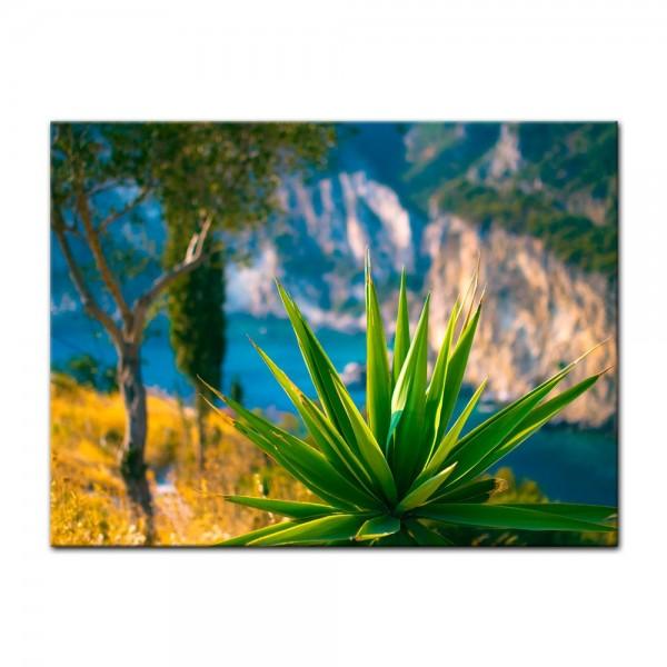 Leinwandbild - Aloe Vera Pflanze - Paleokastritsa Bay Korfu
