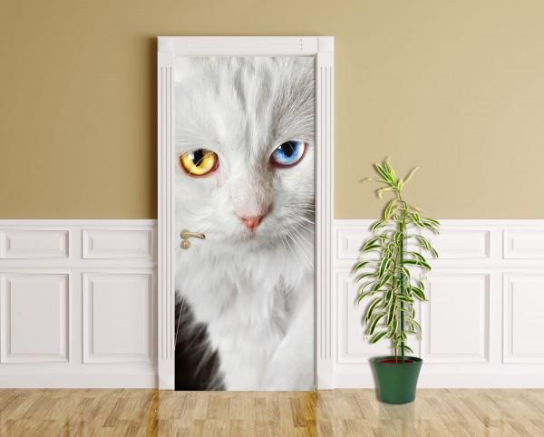 Türaufkleber - Weiße Katze mit zwei Augenfarben