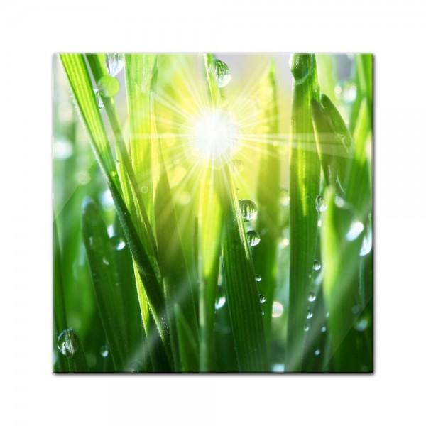 Glasbild - Gras II