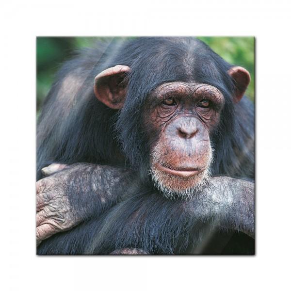 Glasbild - Schimpanse