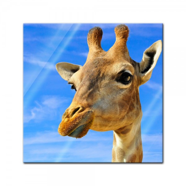 Glasbild - Lächelnde Giraffe
