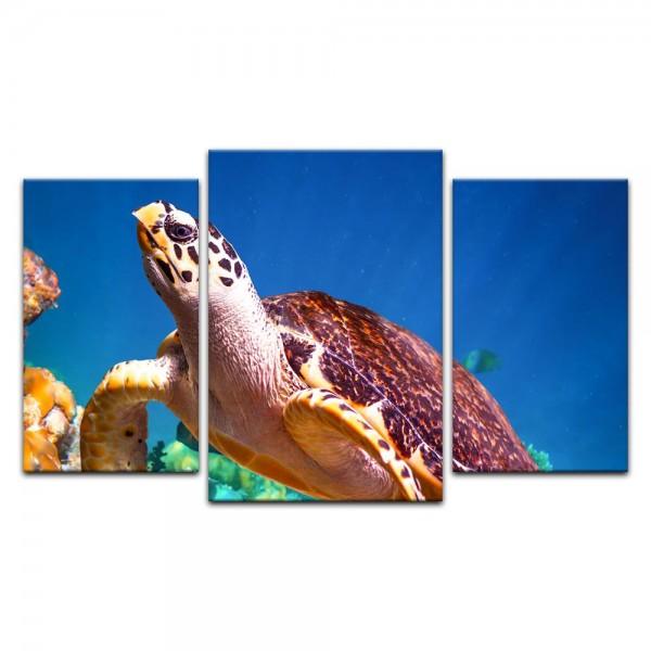 Leinwandbild - Unterwasserwelt V