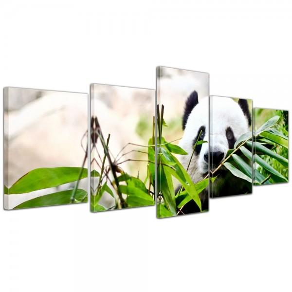 SALE Leinwandbild - Pandabär - 200x80 cm 5tlg