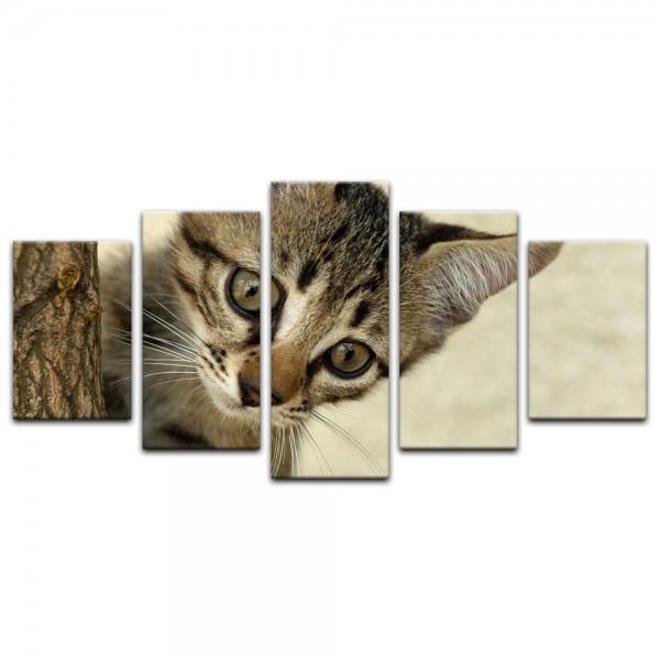Leinwandbild - kletternde Katze