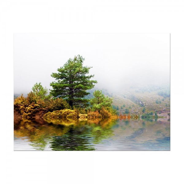 Leinwandbild - Pinienbaum