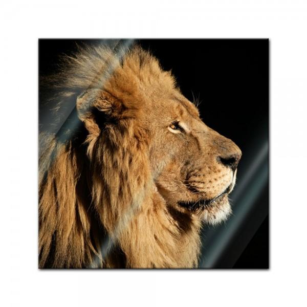 Glasbild - Grosser Afrikanischer Löwe