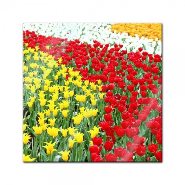 Glasbild - Farbenfrohes Tulpenfeld