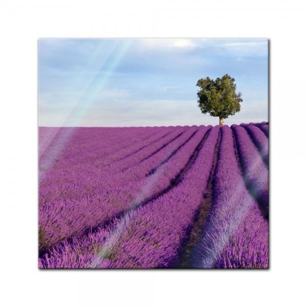 Glasbild - Lavendelfeld in der Provence - Frankreich II