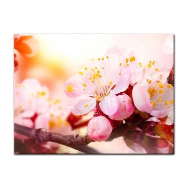 Leinwandbild - Aprikosenblüten