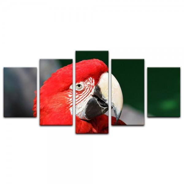 Leinwandbild - Roter Papagei