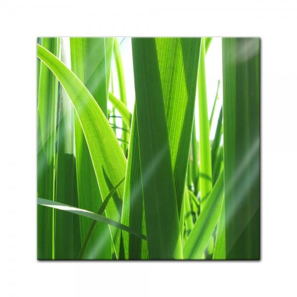 Glasbild - Gras