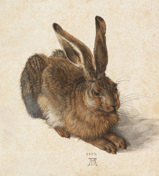 Fototapete Albrecht Dürer - Alte Meister - Feldhase