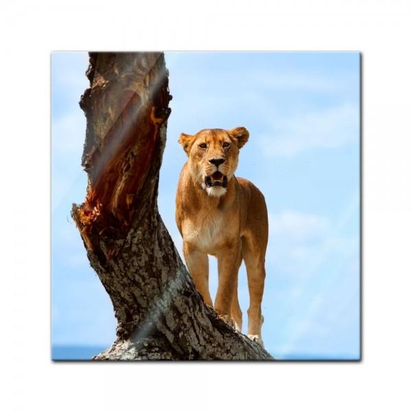 Glasbild - Löwin auf Baum