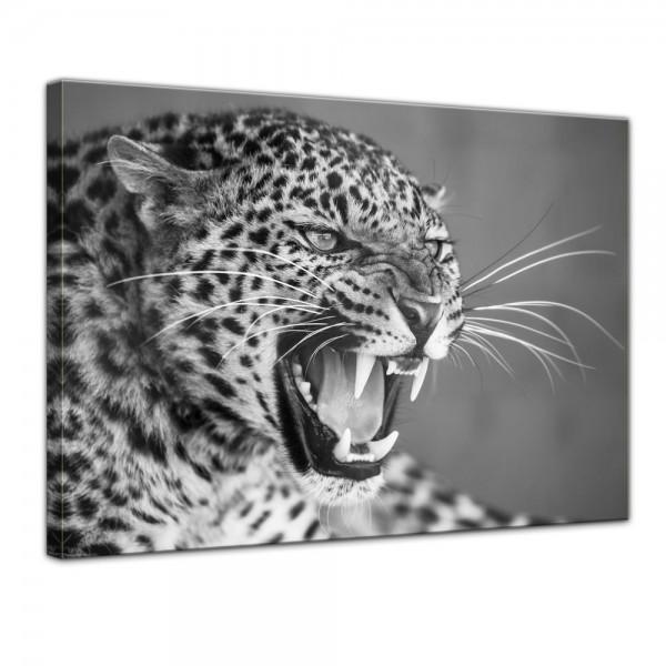SALE Leinwandbild - Leopard schwarz weiß - 120x90 cm