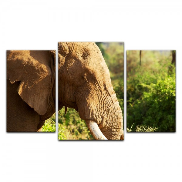 Leinwandbild - Elefantenbulle II