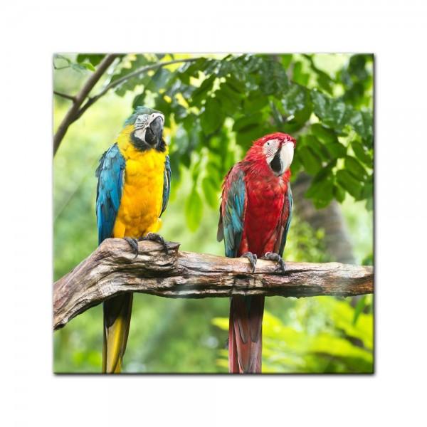 Glasbild - Macaw Papageien