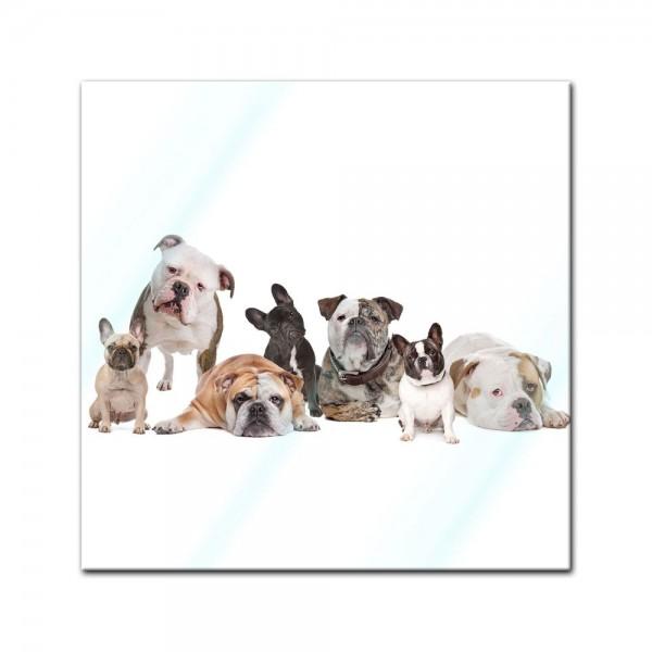 Glasbild - Bulldoggenfamilie