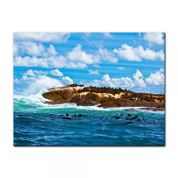 Leinwandbild - Südafrika Seal Island - Robben Insel