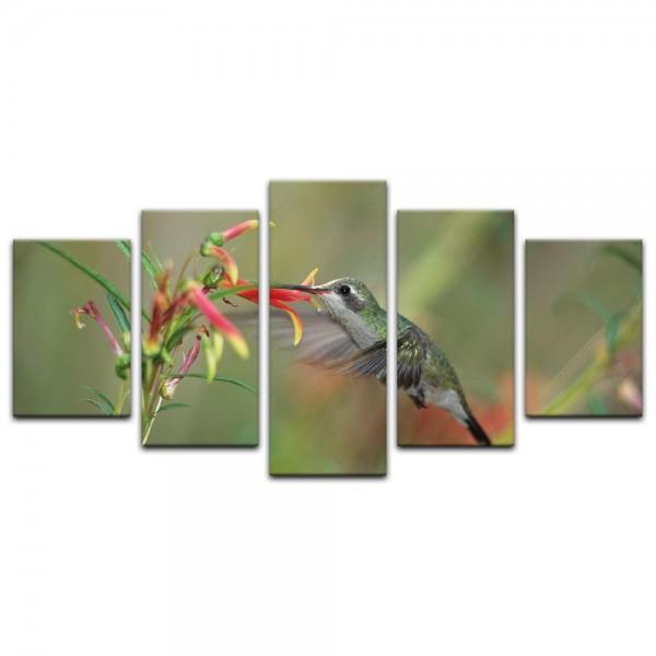 Leinwandbild - Kolibri im Flug